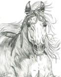 Fund Horses