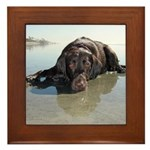 Chocolate Lab KC Framed Tile