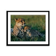 Female Cheetah and her Cub Framed Panel Print